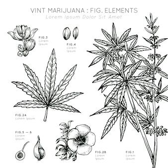 Vint marihuana elementos planta dibujada a mano