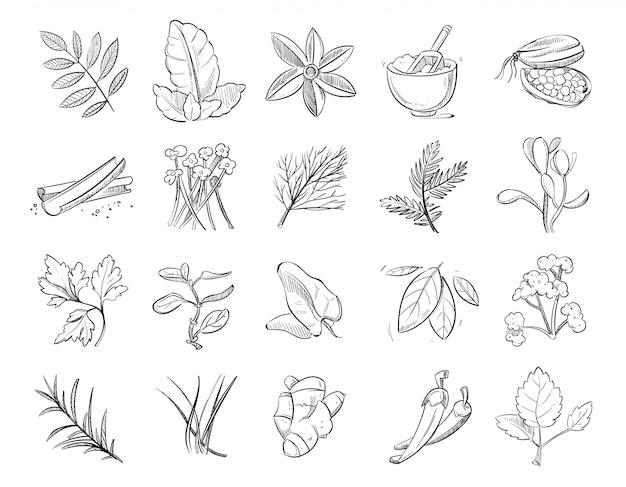 Vintage dibujado a mano hierbas y especias