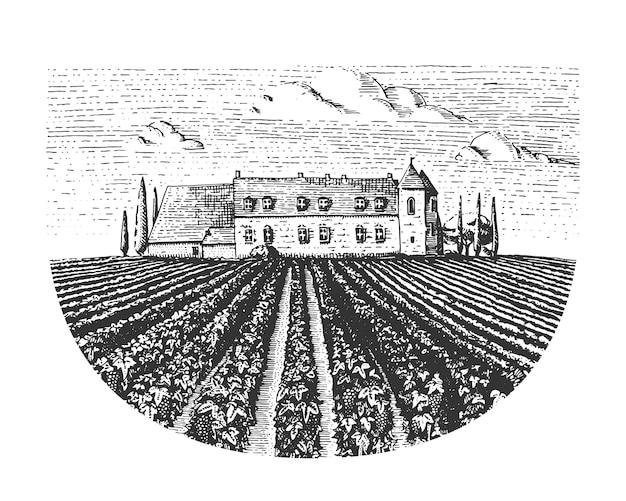 Vintage grabado, paisaje de viñedos dibujados a mano, campos de colmillos, estilo scratchboard o tatooo