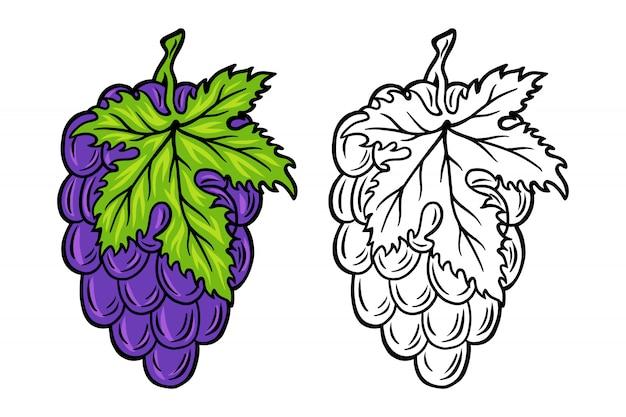 Vintage retro racimo de uvas aislado ilustración vectorial