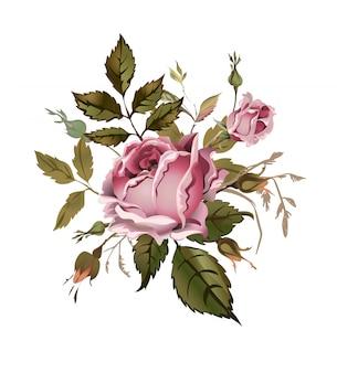 Vintage rosa rosa ilustración vectorial