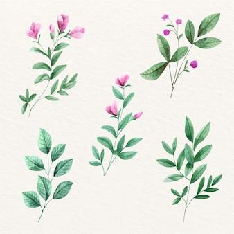 Violeta hermosas flores y hojas