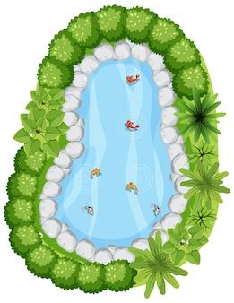 Vista aérea con muchos peces en el estanque de la naturaleza.