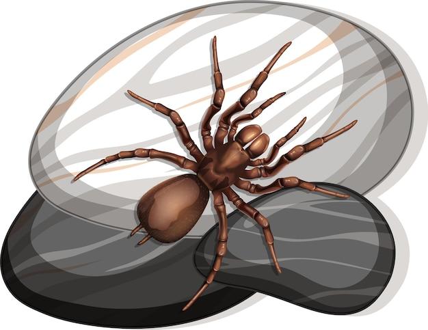 Vista superior de la araña en una piedra sobre fondo blanco.