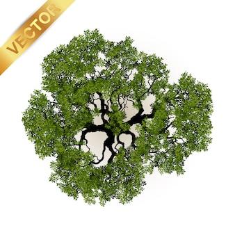 Vista superior de los árboles para el ejemplo del vector del paisaje.
