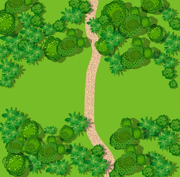 Vista superior del campo con bosque