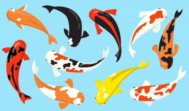 Vista superior del conjunto de iconos planos de peces carpa koi