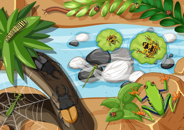 Vista superior de diferentes tipos de rana en la selva.