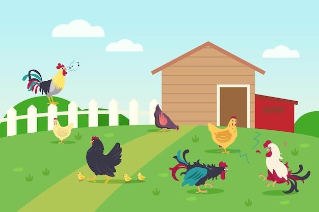 Vivo de gallinas y gallos en campo