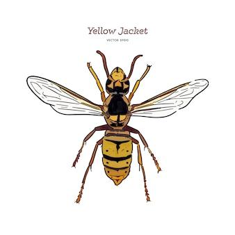 Yellowjacket es sobre un tipo de avispa. dibujar a mano dibujo vectorial.