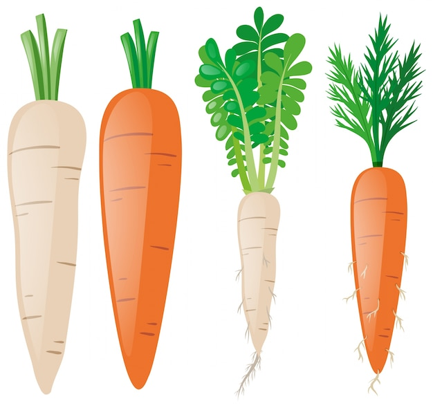 Zanahorias en diferentes formas