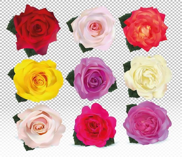 3d realistische rosen schließen oben eingestellt