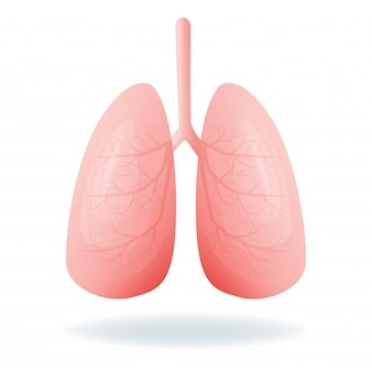 Abbildung der menschlichen lunge
