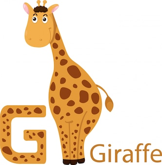 Abbildung des getrennten tieralphabetes g für giraffe