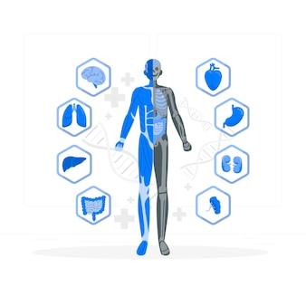 Abbildung des konzepts der körperanatomie Kostenlosen Vektoren