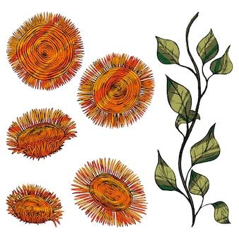 Abstrakte sonnenblumen, stiel mit blättern. dekorative blumen im vintage-, boho-stil, isoliert auf weiss. satz von hand gezeichneten vektorillustrationen. farbige elemente für design, dekor.