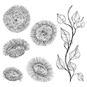 Abstrakte sonnenblumen, stiel mit blättern. dekorative blumen im vintage-, boho-stil, isoliert auf weiss. satz von hand gezeichneten vektorillustrationen. schwarze elemente für design, dekor.