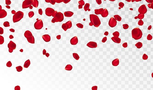 Abstrakter hintergrund mit dem fliegen der roten rosafarbenen blumenblätter getrennt. vektor-illustration rosenblätter vektor-illustration.