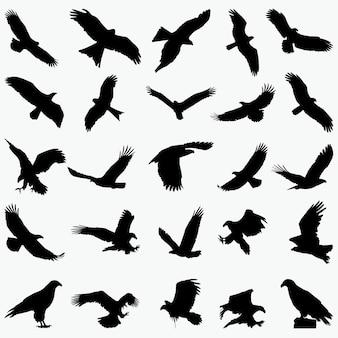 Adler silhouetten