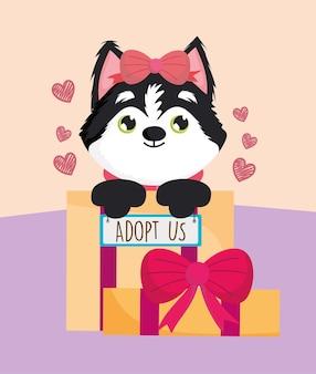 Adoption eines sibirischen hundes