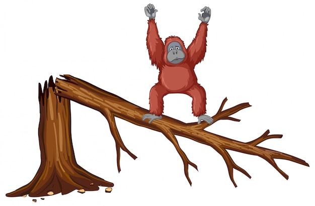 Affe auf gebrochenem zweig