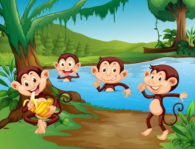 Affe, der am see spielt