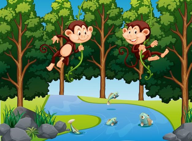 Affe, der an der rebe im wald hängt