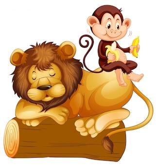 Affe sitzt auf löwe