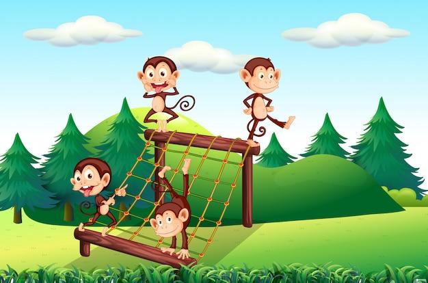 Affe spielt am spielplatz