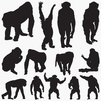 Affen silhouetten festgelegt