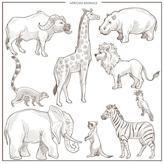 Afrikanische tier- und vogelskizze. vektor lokalisierter büffelochse, giraffe oder nilpferd und löwe