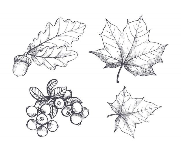 Ahornblatt und herbstliche eichel hängen set