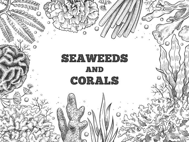 Algen-hintergrund. riffaquatisches unkraut und korallen, unterwasserozean und aquarienleben. marine japanisches, chinesisches lebensmittelskizzen-vektorplakat. illustration banner riff und unterwasser wasserskizze