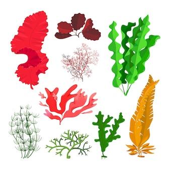 Algen- und korallenriff-unterwassersammlung lokalisiert auf weiß.