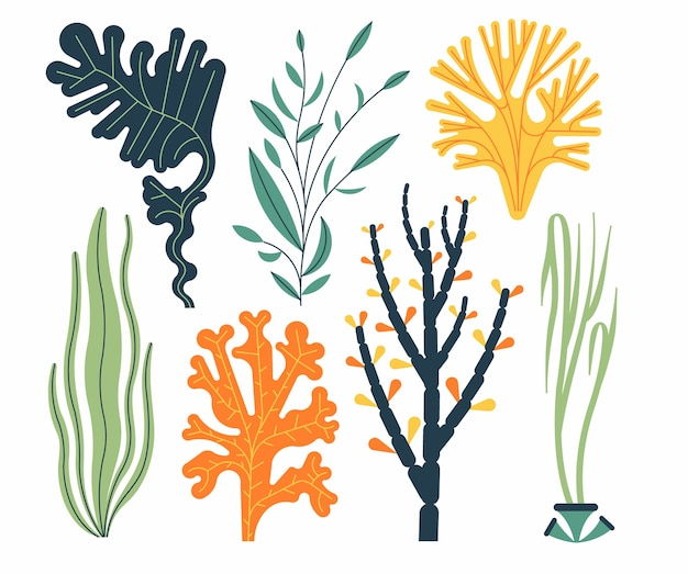 Algensatzillustration lokalisiert auf weiß. meerespflanzen und aquatische meeresalgen.