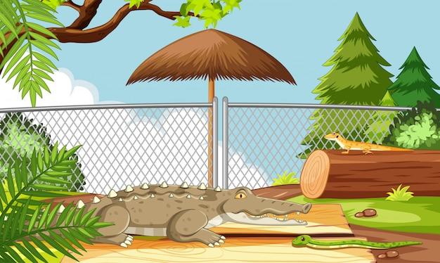 Alligator in der zooszene Kostenlosen Vektoren
