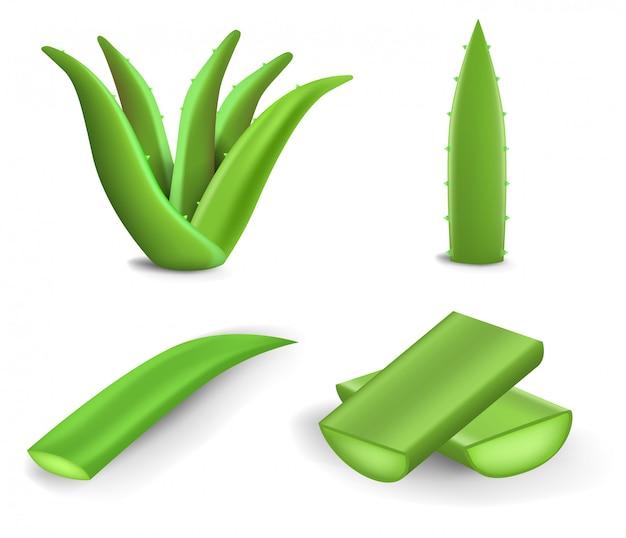 Aloe-icon-set. realistischer satz aloevektorikonen für das webdesign lokalisiert auf weißem hintergrund