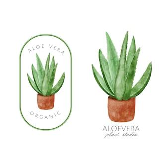 Aloe vera aquarellillustration