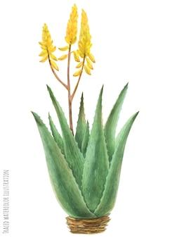 Aloe vera bush