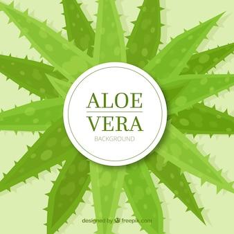 Aloe vera dekorativen hintergrund