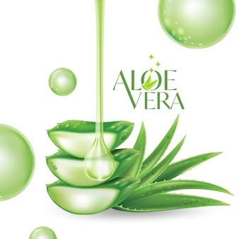 Aloe vera illustration