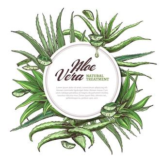 Aloe vera kreisrahmen mit handgezeichneten scheiben und blättern der kräutermedizinillustration