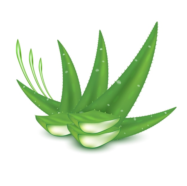 Aloe vera pflanze frisches grün collagen und vitaminserum hautpflege schönheitskosmetikprodukt