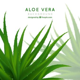 Aloe vera pflanze hintergrund