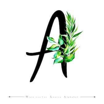 Alphabet-buchstabe a mit aquarell verlässt hintergrund