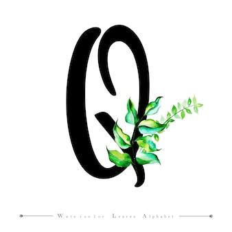 Alphabet-buchstabe q mit aquarell verlässt hintergrund
