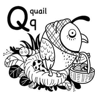 Alphabet buchstabe q wachtel in der hand gezeichnet