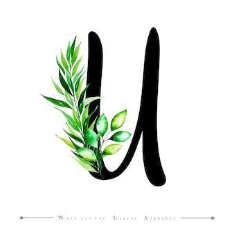 Alphabet buchstabe u mit aquarell verlässt hintergrund