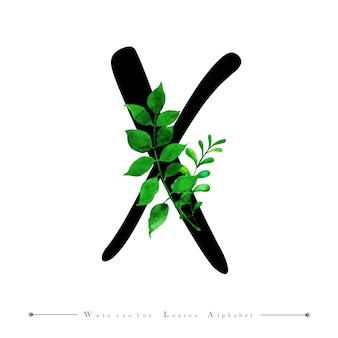 Alphabet-buchstabe x mit aquarell verlässt hintergrund