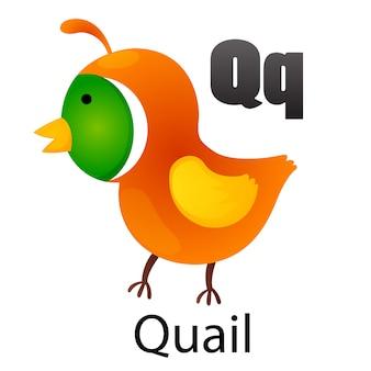 Alphabetbuchstabe q-quail